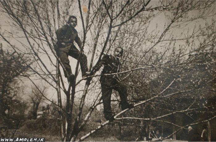 بالای درخت – ۱۳۳۹