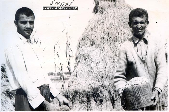 کیله کردن برنج دهه ۴۰